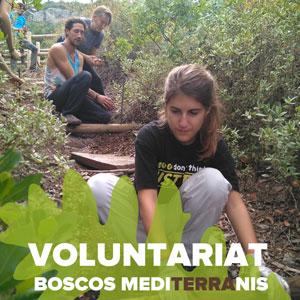 Voluntariat Boscos Mediterranis - Dia 24 de novembre Bosc de Poblet 2019