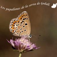Exposició 'Les papallones de la serra de Godall'
