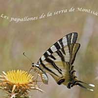 Exposició 'Les papallones de la serra del Montsià'