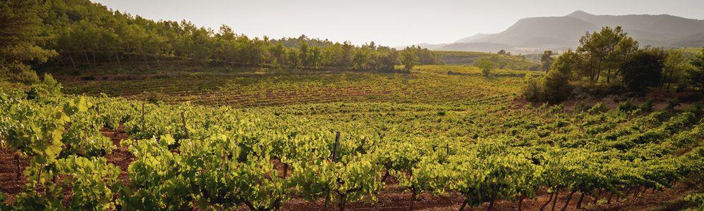 Bages Terra de Vins