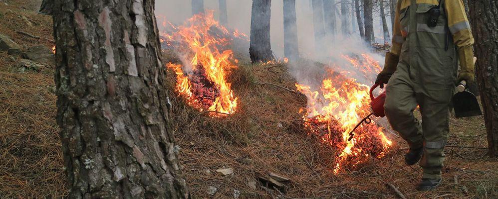 Imatge d'un incendi forestal