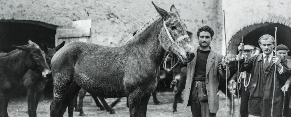 Un firandant amb una de les seves mules a l'antiga fira de Salàs