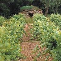 Ruta de les barraques de vinya al celler Abadal